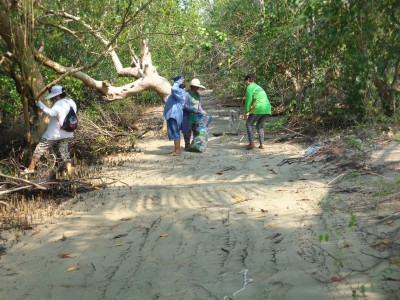 Clean-up  of Mangrove